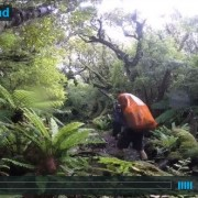 video-Stuart-Island-NZ