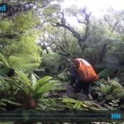 video-Stuart-Island-NZ